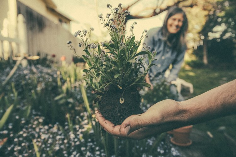 Become a self-employed gardening assistant | Pro Business Ideas